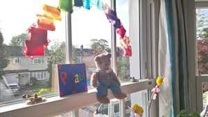 Alice bear in window